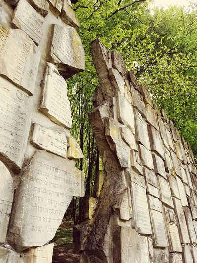 Remember the past.... Cementery Jewish Memorial Architecture History Nature