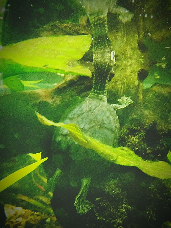 Turtle Kew Gardens London Summer Summer Holidays Holidays Sommer Ferien Sommerferien England