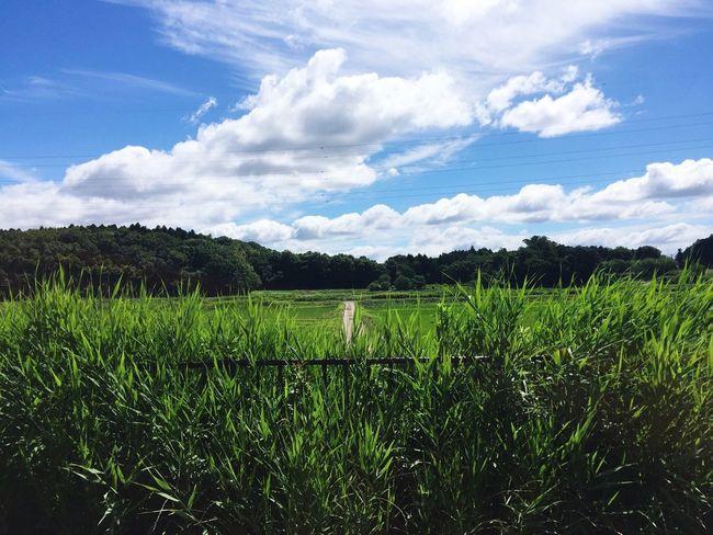 That's It Nature Japan Ibaraki Road Towards The Sky Reaching Heaven