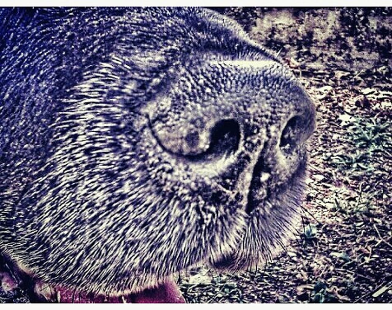 animal themes, one animal, animals in the wild, close-up, bird, no people, day, outdoors, nature, mammal