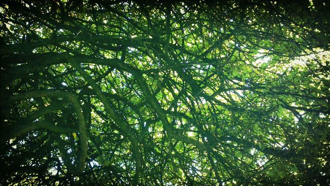 Bäume Trees Donaulende Light