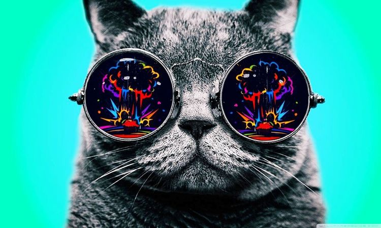 Cat Lovers Bestphoto Photography Treasure Awesome