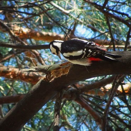 Animals In The Wild Animal Wildlife Tree Nature Bird Low Angle View No People Outdoors Beauty In Nature Close-up Woodpecker Woodpecker In Tree Woodpeckers Ukraine Bird Photography Birds In A Tree