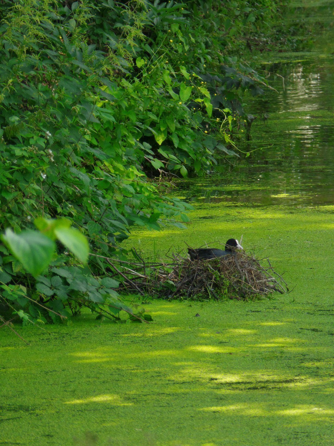 Landscape Birds Sliedrecht Netherlands ❤ Water And Nature Green Green Green!  Bird Animals Trees
