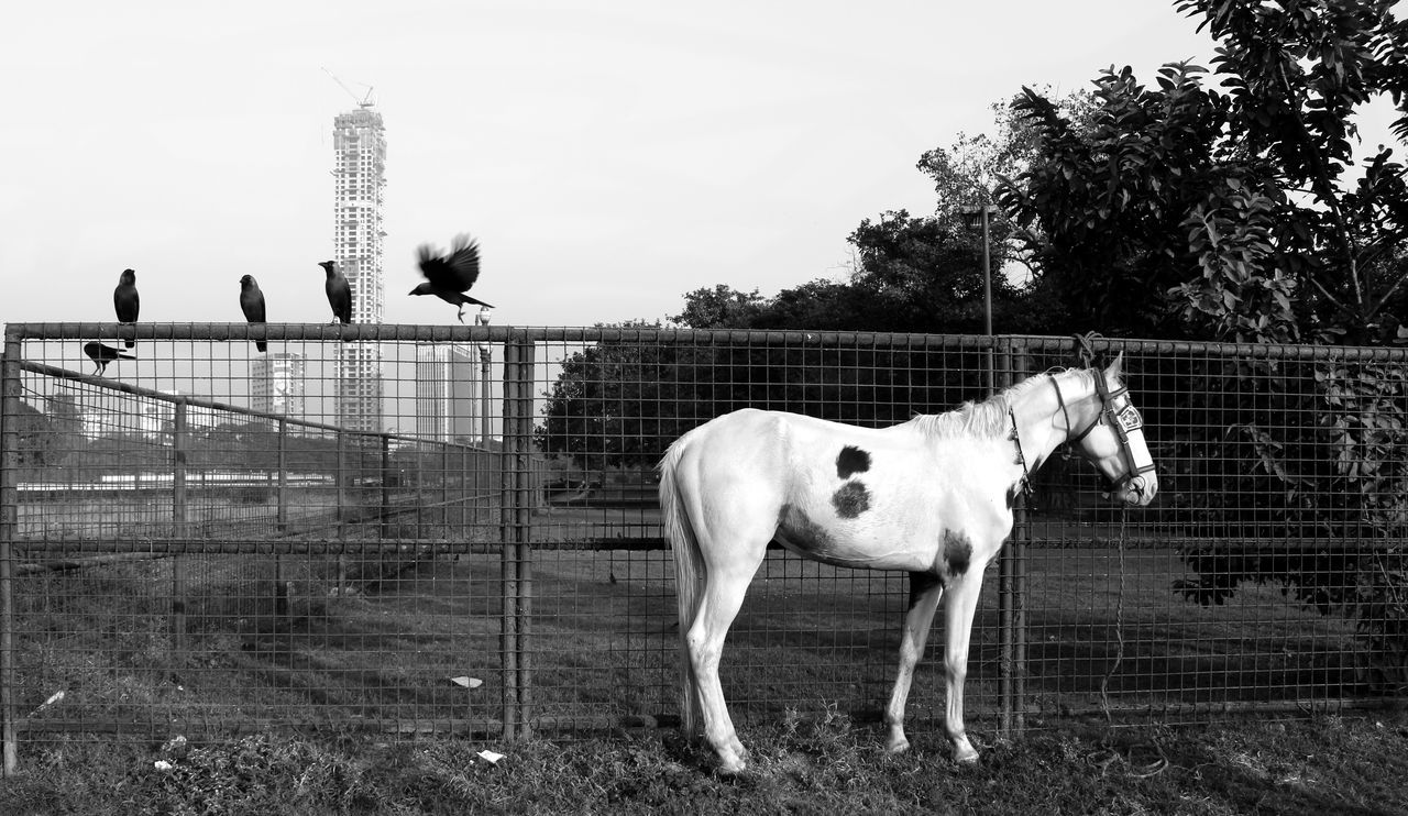 Horse By Fence Against Sky