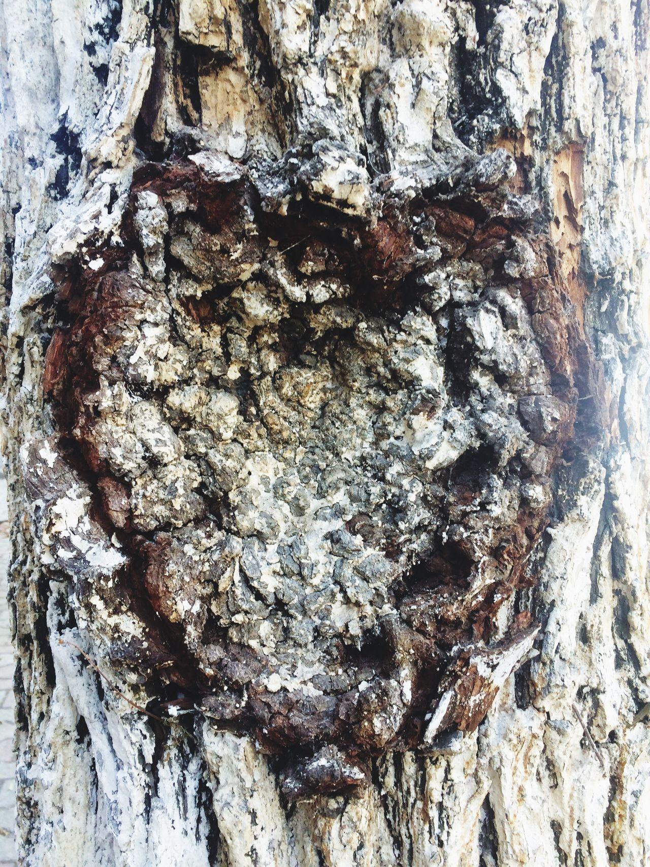 Heart Shape Heart Heart Shapes In Nature Carved In Wood Carved On Tree Carved Heart Carved Heart In Treebark Love Popular