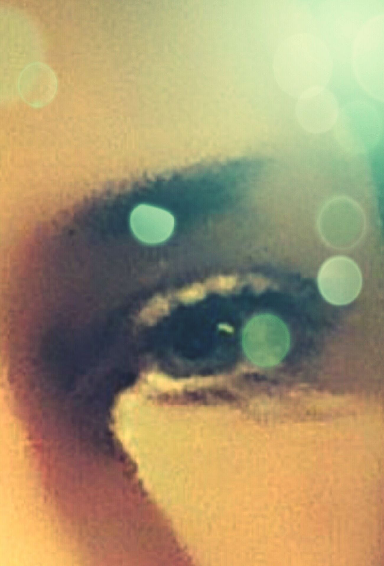Hello World EyeEm Best Shots Eyeemphotography Single Object Beautiful Looking To The Other Side Doyoulikeit? Lookatme Seductive Creative Light And Shadow Dynamic CreativePhotographer MyCrazyBeautifulLife MyWorld ♡ Thatlook Cometorome Power In Nature