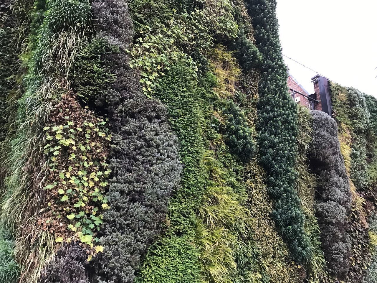 Wall Of Flowers Tree Growth Architecture Green Color Grass EyeEm Best Shots London Photography Art By Laziz British Weather Frowerwall Green London