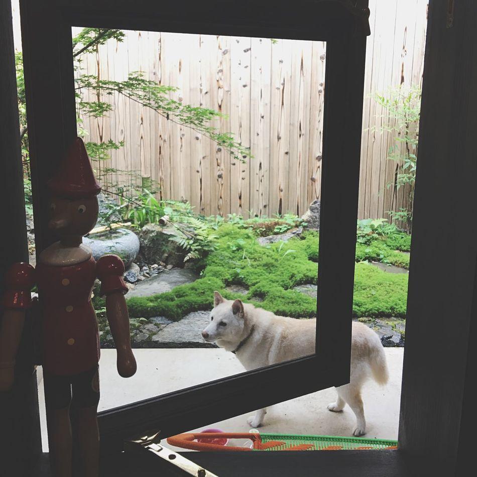かっちゃん家に山ピーが造った 日本庭園 お庭 庭師