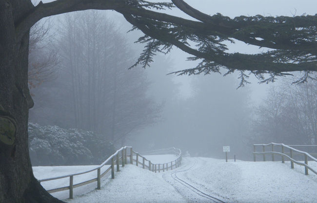Bare Tree Beauty In Nature Cold Temperature Diminishing Perspective Foggy Day Frosty Mornings Misty Morning Nature Outdoors Snow Snow Covered Tranquil Scene Tranquility Tree Winter Winter Walk Winter Woodland Wooden Fence Misty