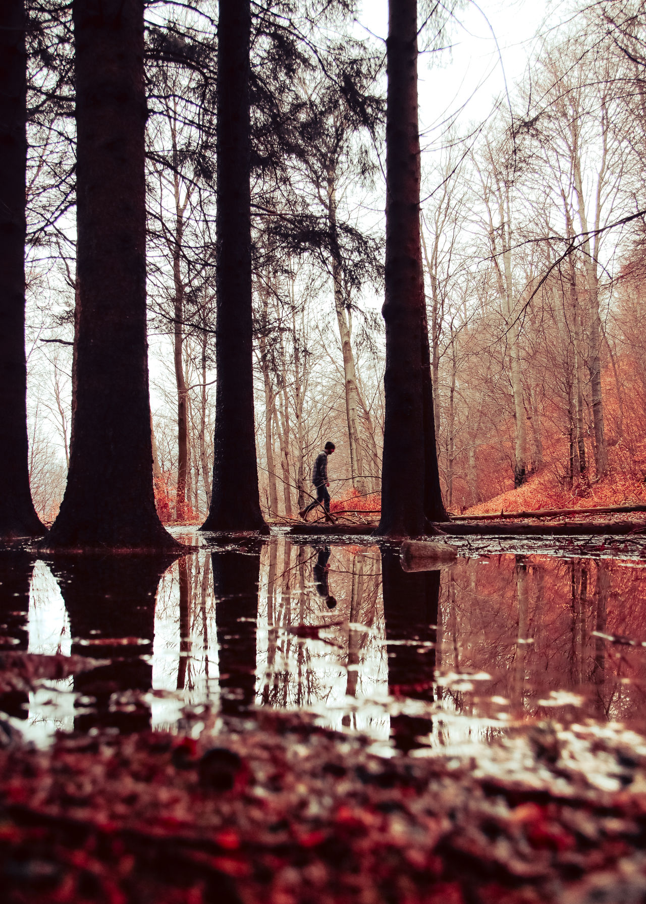 Autumn Bare Tree Beauty In Nature Creepy Darkness EyEmNewHere Forest Into The Woods Lake Leaves One Man Only One Person Outdoors Red Reflection Scenics The Great Outdoors - 2017 EyeEm Awards Tranquil Scene Tranquility Tree Tree Trunk Walking Alone... Wandering Wanderlust Wood