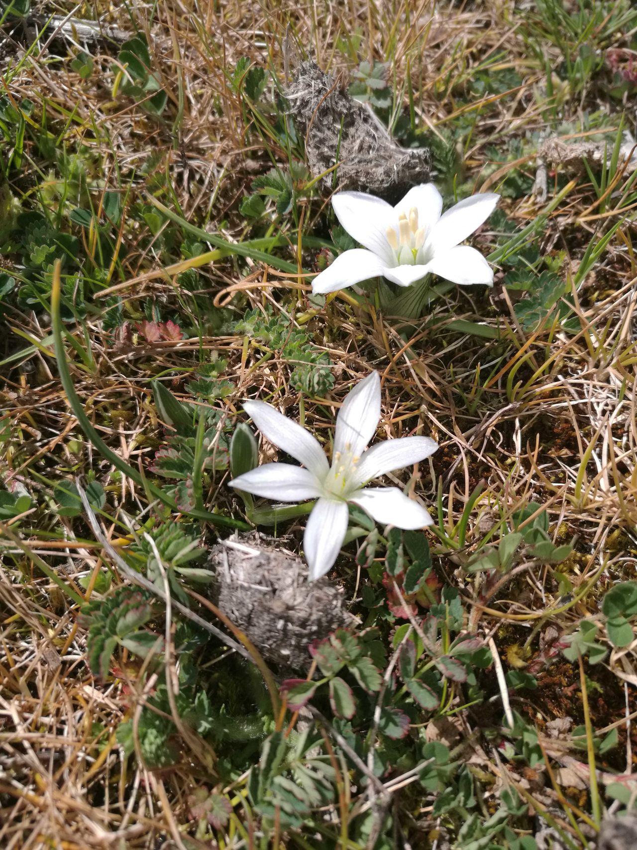 Flowers Flowery Nature Sardinia,italy Mountain
