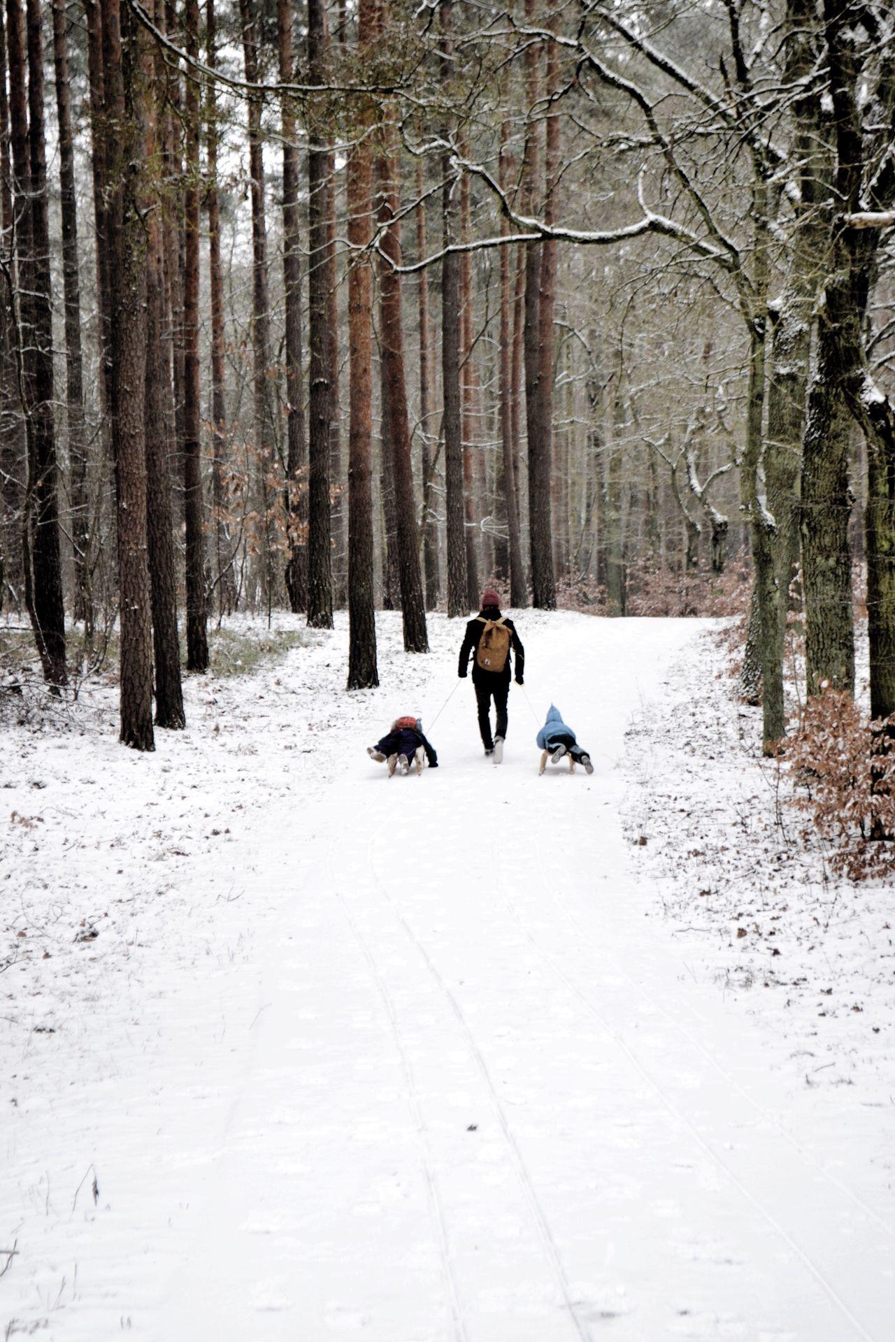 Snow Winter Woods Bestdadever Sledding