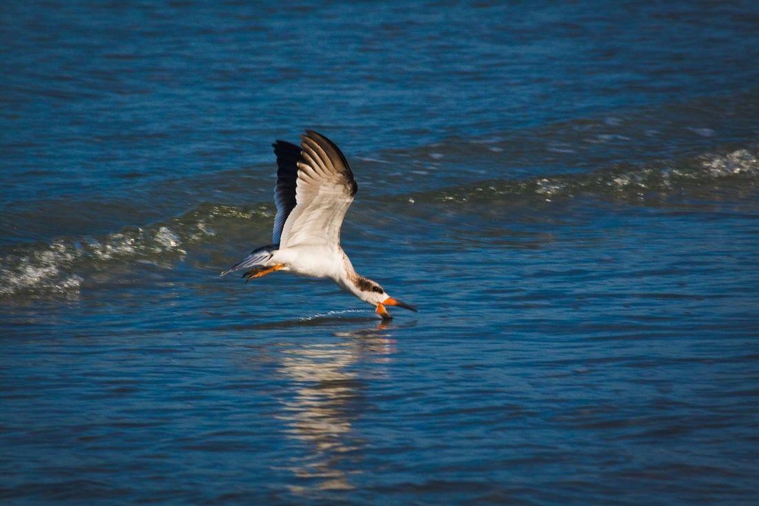 Nature Animals Birds Beach