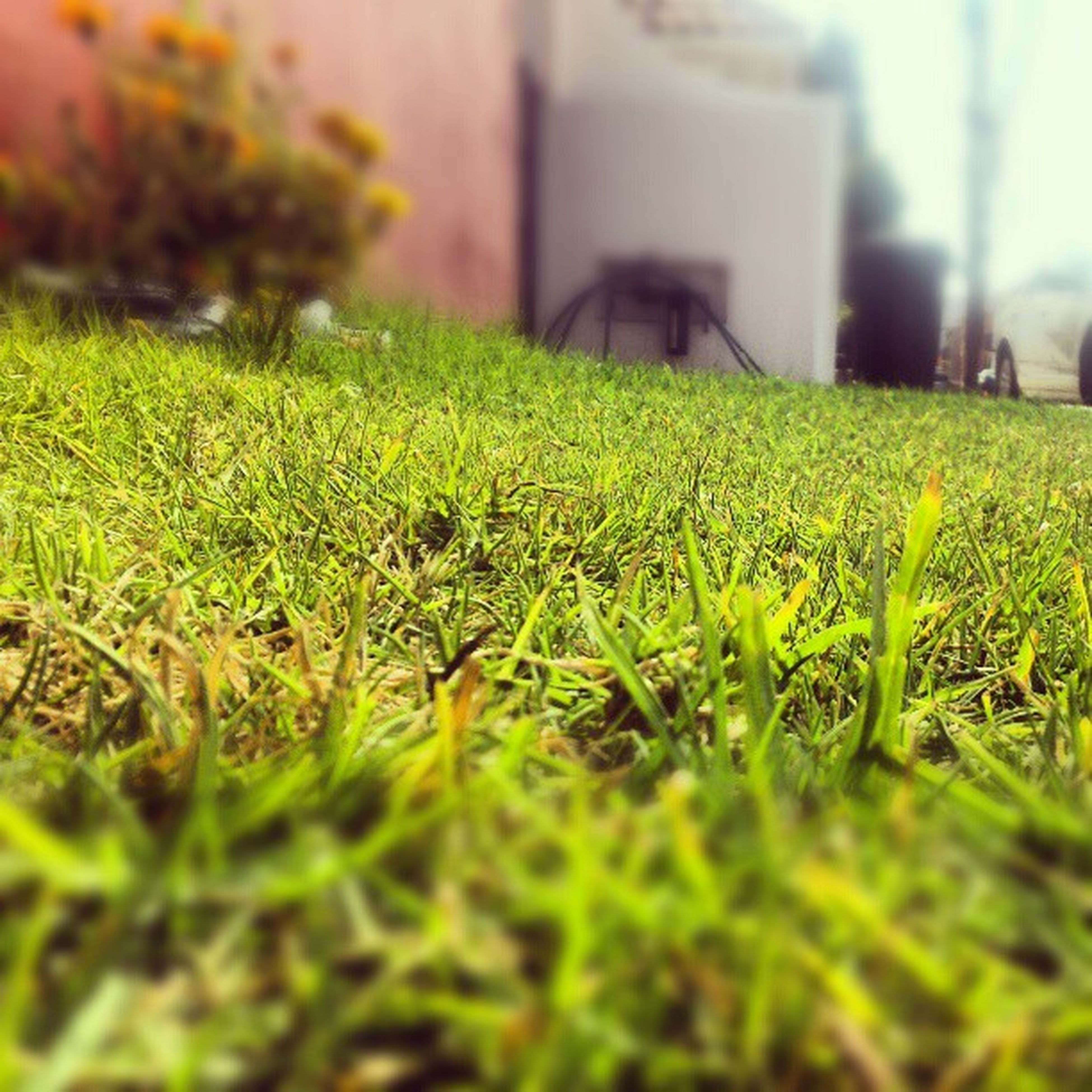 grass, field, growth, green color, selective focus, grassy, plant, surface level, nature, focus on foreground, beauty in nature, built structure, building exterior, close-up, green, outdoors, day, freshness, growing, tranquility