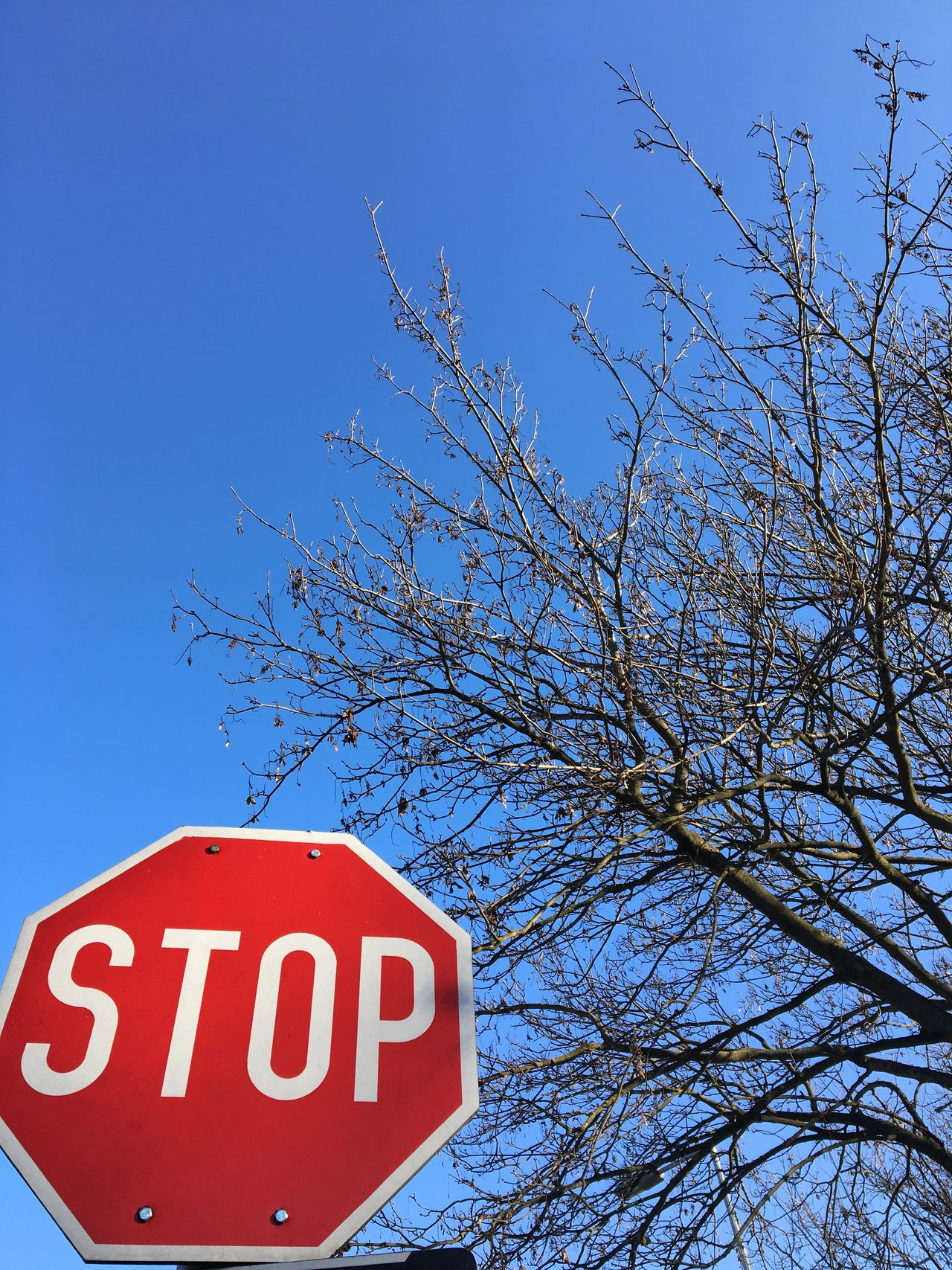 Stop?!?!? Red Blue Low Angle View No People Clear Sky Outdoors Text Stop Bare Tree Outdoor Photography Withphone Natural Beauty Beautiful Clouds Clouds And Sky Colors NoEffects  Noeffect Beauty In Nature Hungary Nature Day Tree Road Sign Sky