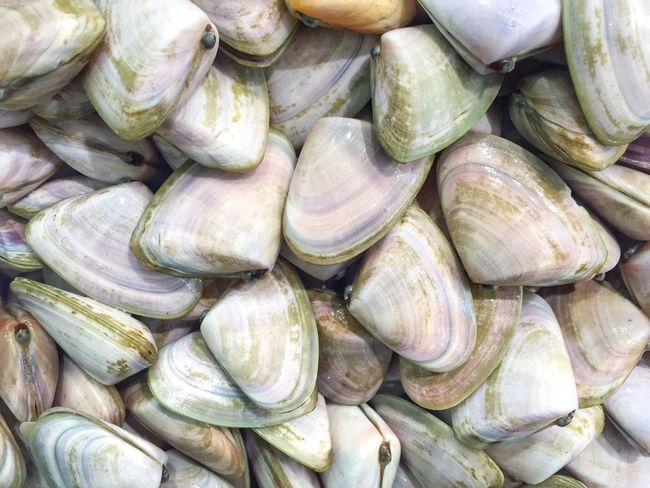 Clams. Seafoods Seafoodporn SeafoodLover Close-up Freshness Wet Market Market Wet Fish Market Foodporn Flat Top Down Sea Life Backgrounds Texture