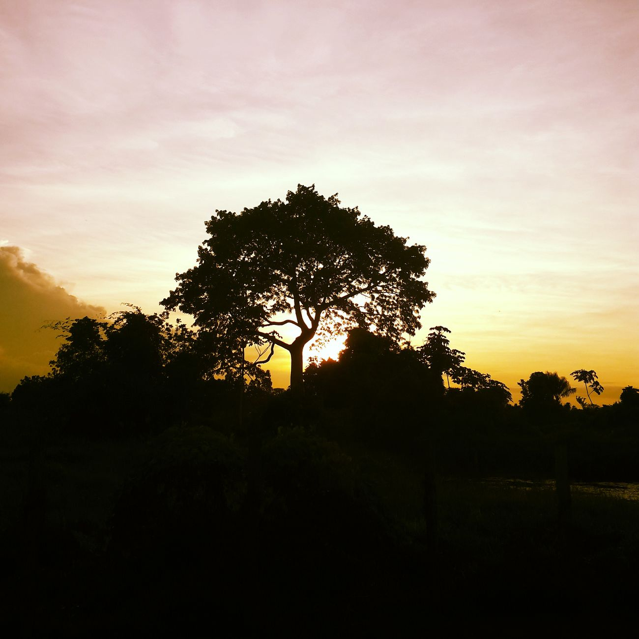 Not Africa. Just Suriname at sunset.
