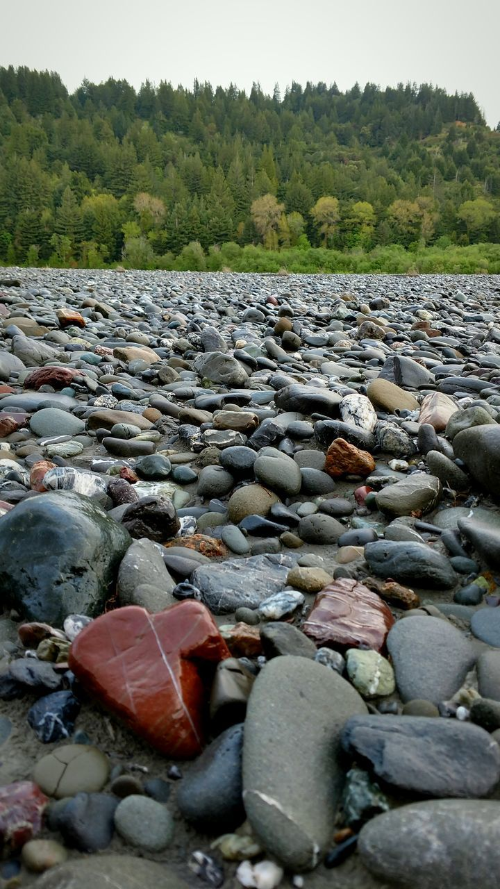 pebble, pebble beach, stone - object, nature, shore, day, surface level, outdoors, no people, water, tree, rock - object, beach, beauty in nature, close-up