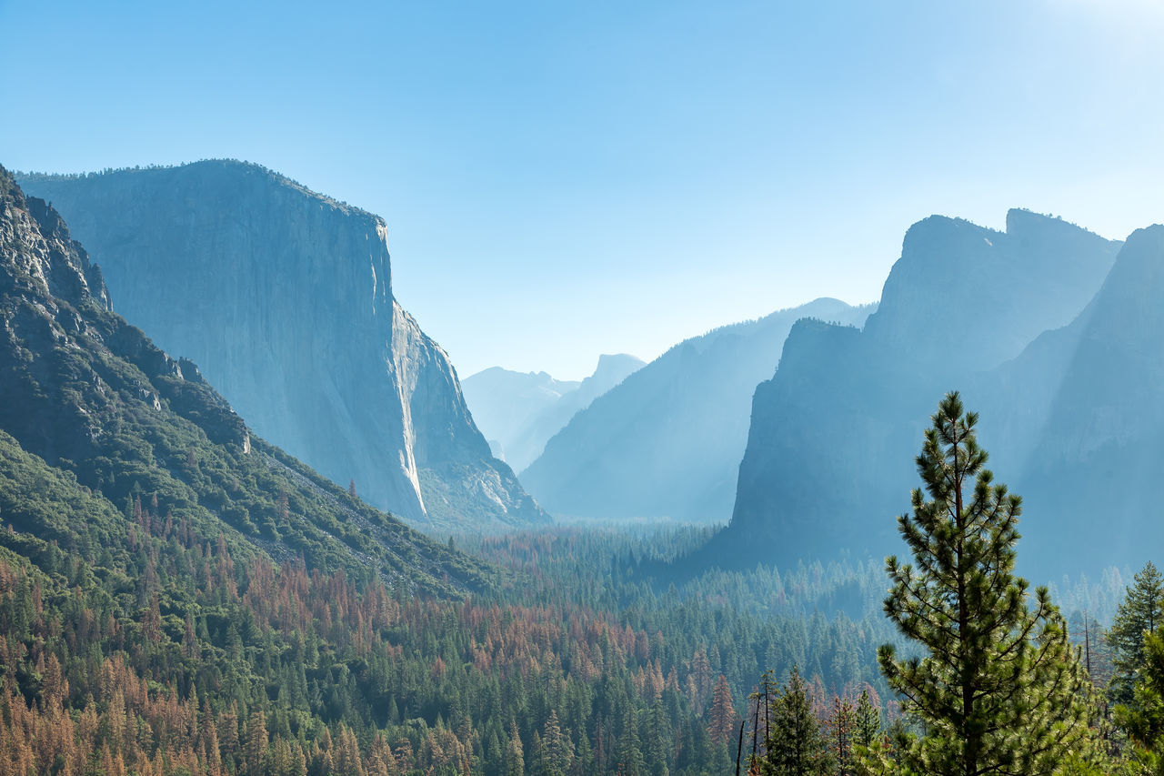 Beauty In Nature Day Forest Growth Landscape Mountain Mountain Range Nature No People Outdoors Pine Tree Scenics Sky Tree