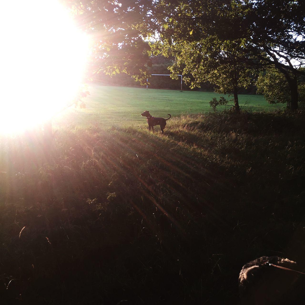 Puppy Dog Sunset First Eyeem Photo
