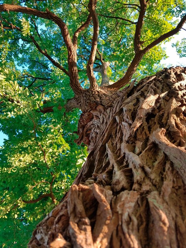 A squirrels point of view Tree Trunk Nature Day Outdoors Low Angle View No People Green Color Beauty In Nature Tree Close-up Photography Walking Around Taking Pictures Artistic Photography Luis Daniel Photography Beauty Is In The Eye Of The Beholder