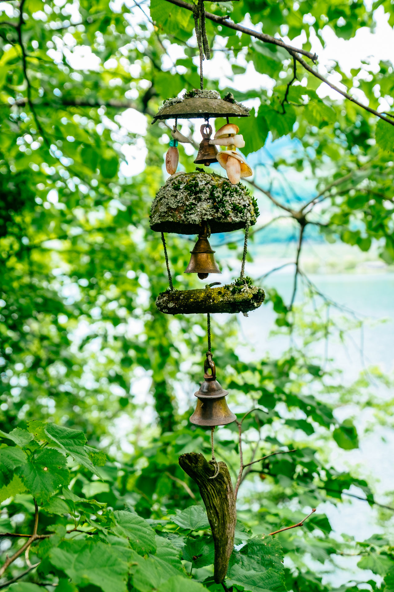 Animal Themes Animal Wildlife Animals In The Wild Bird Branch Close-up Day Focus On Foreground Green Color Growth Leaf Low Angle View Nature No People Outdoors Plant Tree