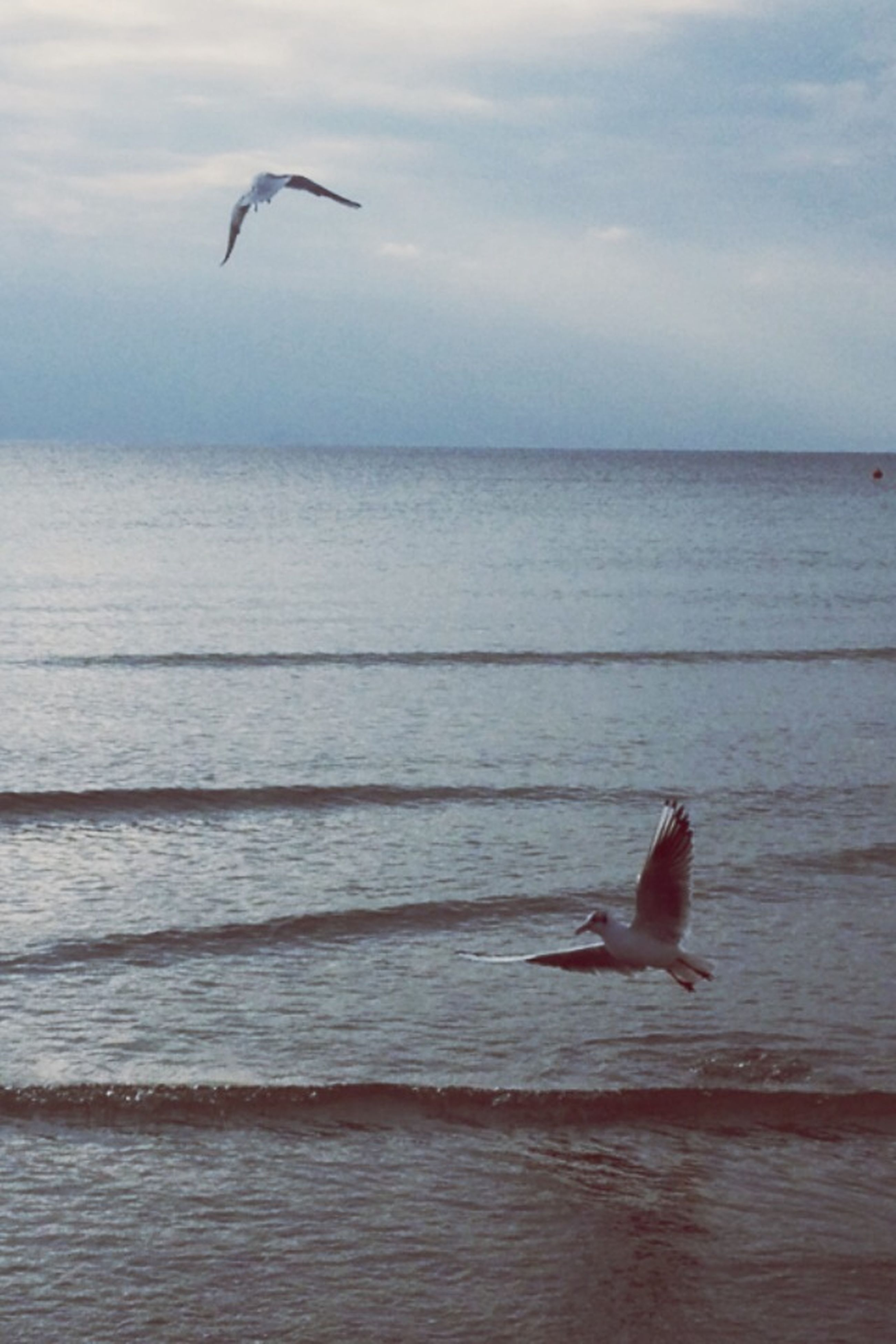 bird, animal themes, animals in the wild, flying, wildlife, sea, spread wings, water, seagull, horizon over water, sky, one animal, mid-air, nature, beauty in nature, beach, tranquil scene, scenics, tranquility, motion