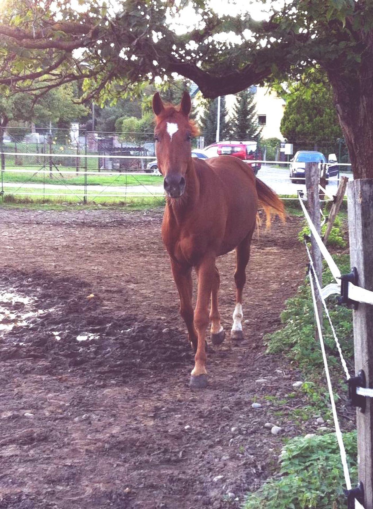 Forever different ;) Horses Horse Kiyomi Mitsuki