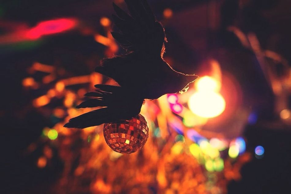 Beautiful stock photos of christmas, Celebration, Disco Ball, Hanging, Illuminated