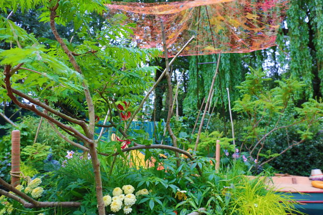 RHS Chelsea Flower Show 2016 Beauty In Nature Chelsea Day Event Flower Flower Show Garden Garden Photography Green Color Growing Growth Nature No People Outdoors Plant RHS Chelsea Flower Show Tranquility