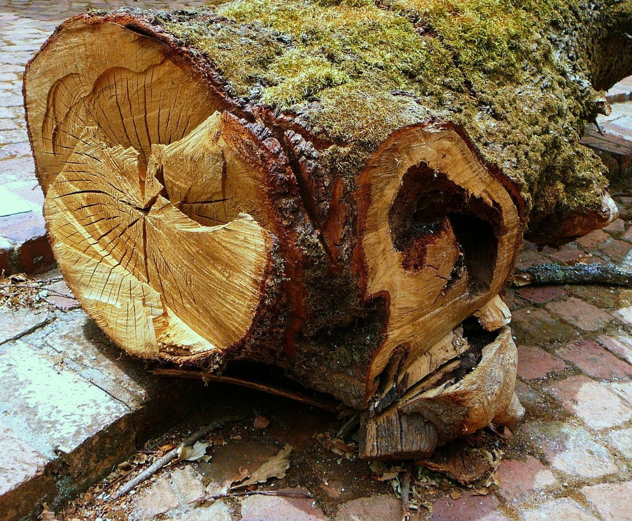 wood - material, log, day, no people, tree stump, nature, textured, close-up, outdoors, tree