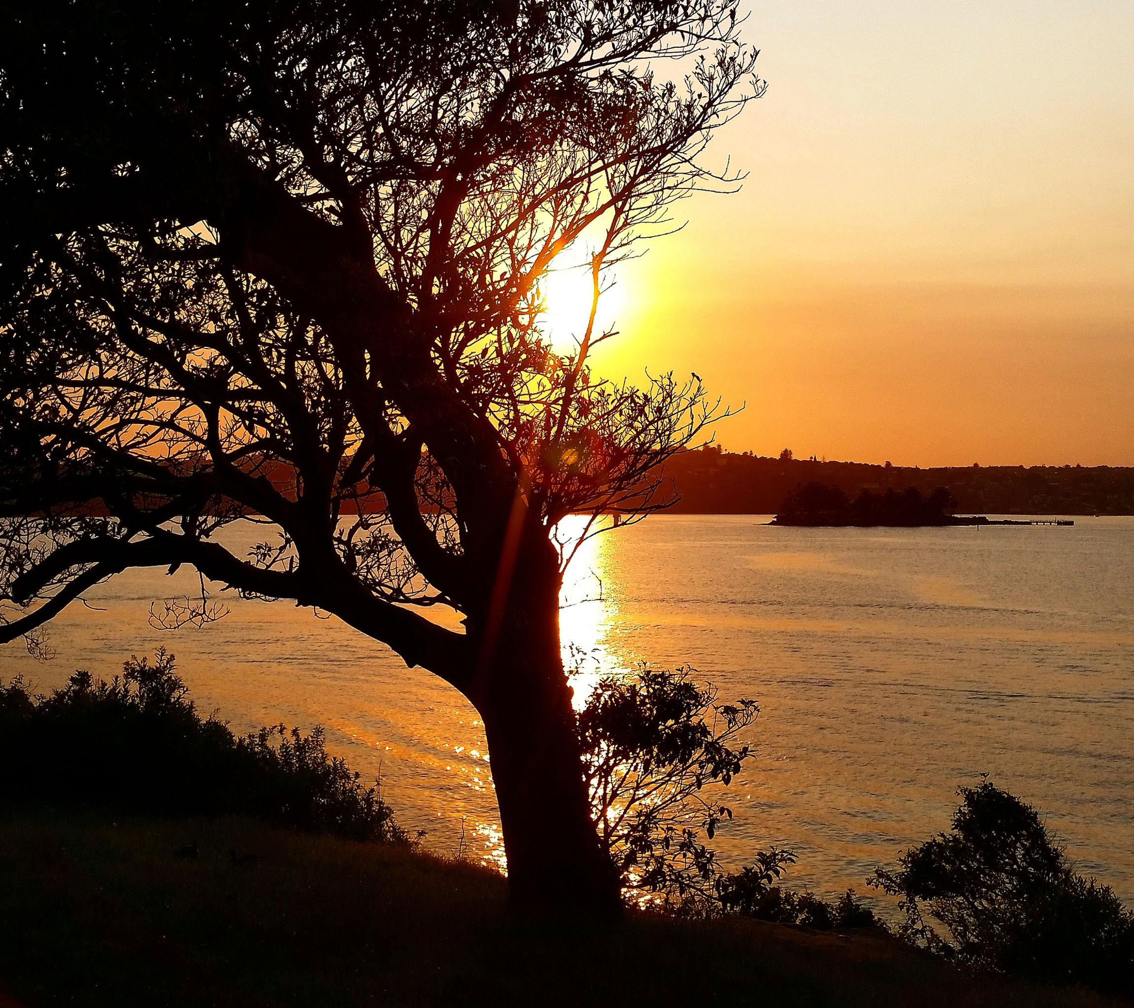 Narmadariver Sunrise Behindtree