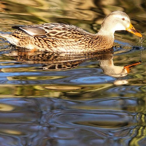 On a clear sunny day, there is sheer joy in watching a bird play in the water. Travel Vacation Nature Beach lake flowers bird birds mothernature ladd00 scenery roadtrip landscape wilderness msp minnesota twincities
