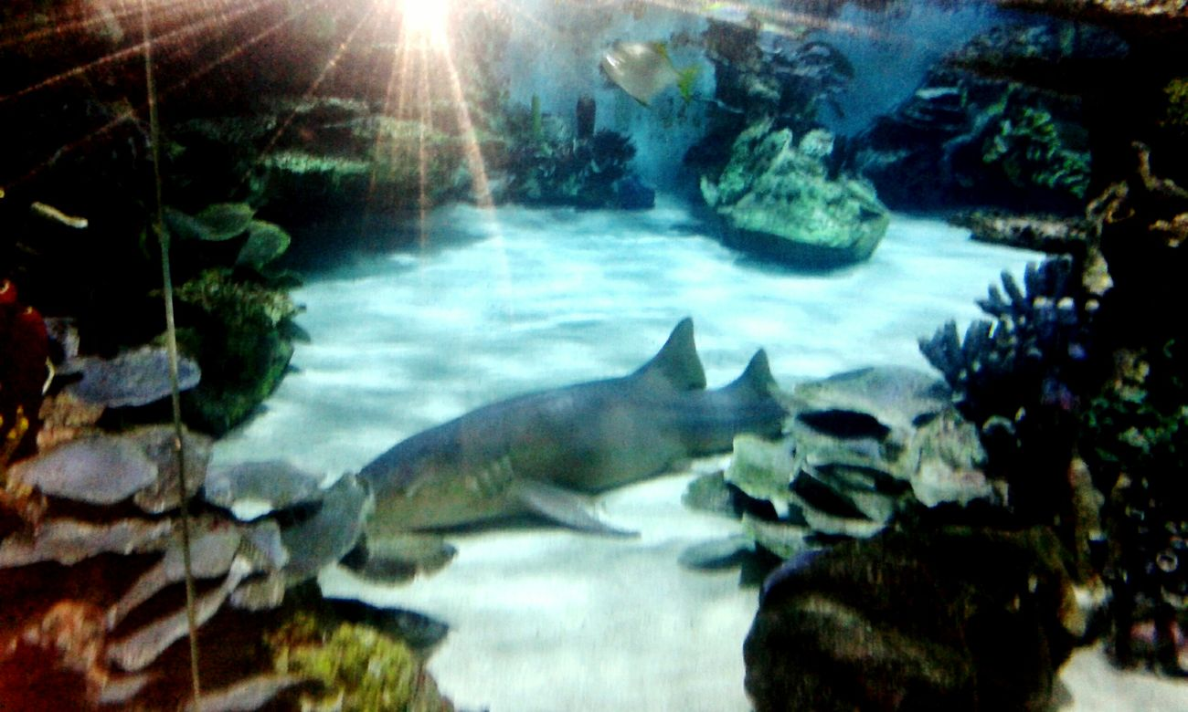 Relaxing tropicarium Norrkoping Enjoying Life First Eyeem Photo