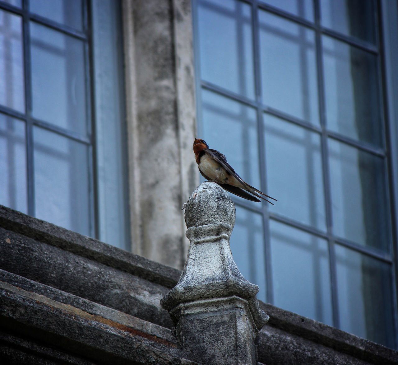 Close-Up Of Bird Perching On Building Against Sky