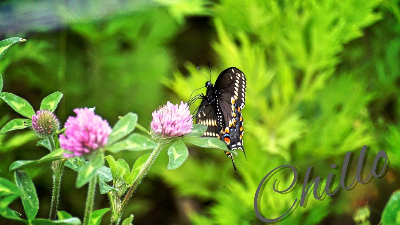 EyeEm Nature Lover Butterfly Flowerporn Eye4photography  Color Beauty Sony A6000 Soaking Up The Sun Macro EyeEm Best Shots