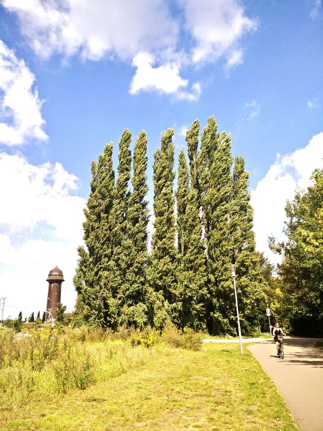 Sommer Pappeln Nothing Says Summer Like A Wall Of Poplar Trees Against The Sky Poplars