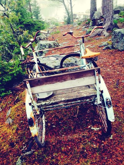 Abandoned Old Mode Of Transport Worn Out Wreck Bicycle OldButGold Sweden Skärså Forest Beautiful Hälsingland Damaged Obsolete Transportation Run-down Deterioration Discard Bad Condition Broken Destruction Weathered Day Outdoors Discarded Ruined Messy