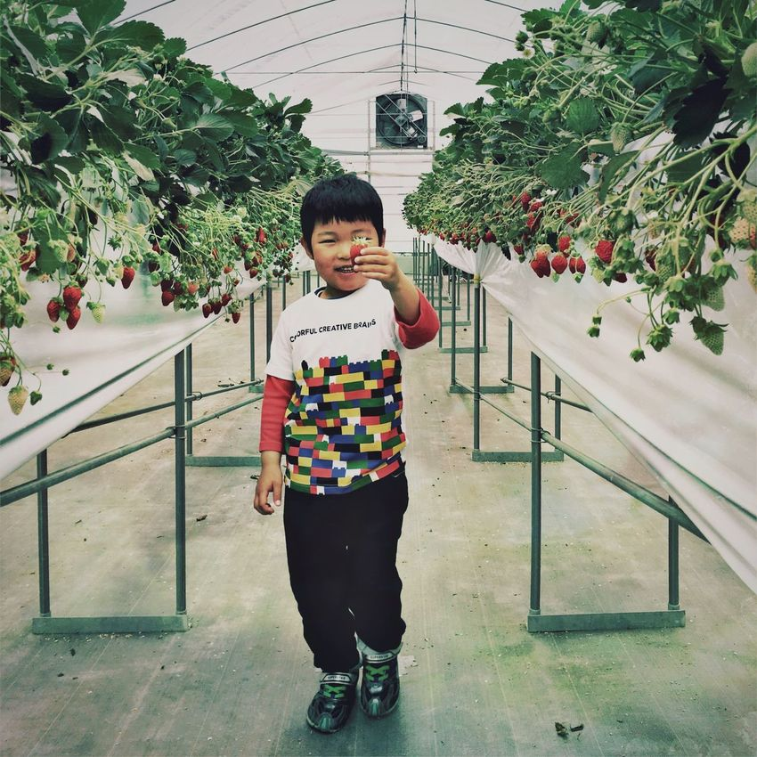 Strawberry Farm Berry Family Showcase April Picking Strawberies  Strawberries Strawberry Holiday Fruit Fruits Hipstamatic Family The Portraitist - 2016 EyeEm Awards Ultimate Japan Adventure Club People Together Colour Of Life