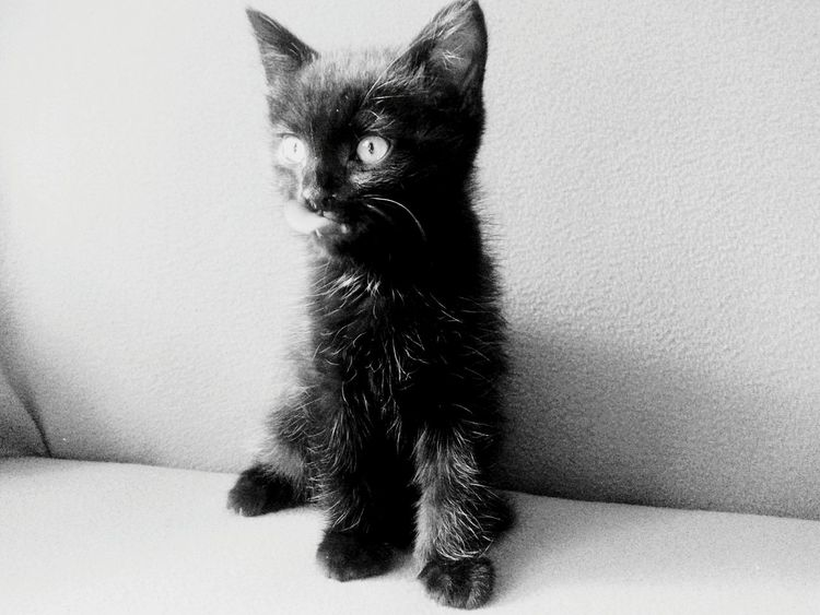 Beautiful ♥ Cat♡ Sweet♡ Funny Moments Eyem Cute Cats EyEm Animal Lover Black Cat Small Smartphonephotography