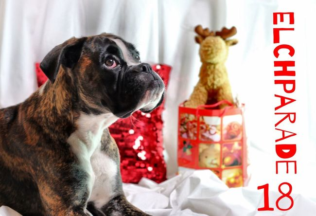 Türchen 18 Juno's Adventskalender Juno's World For My Friends That Connect Christmastime I Love My Dog Boxer