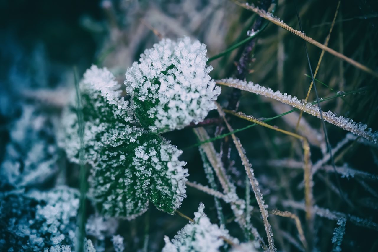 Close-Up Of Frosty Plants