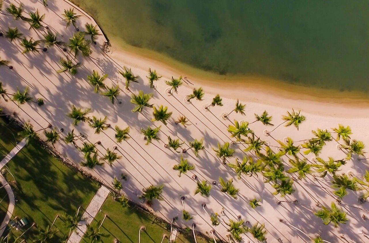 Palm Tree Beach Beachphotography Beach Life Palmtree Oceanside EyeEmNewHere