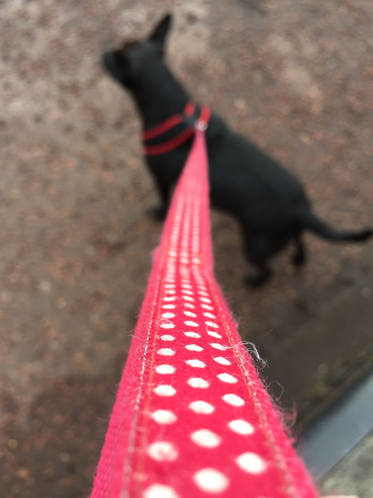 Dog Walking No Edit/no Filter Nature On Your Doorstep Armstrong Bridge River Walk Long Horns Food Market Local Support Your Local Polka Dots  Ready For A Pint Winters Day EyeEm Nature Lover EyeEm Best Shots