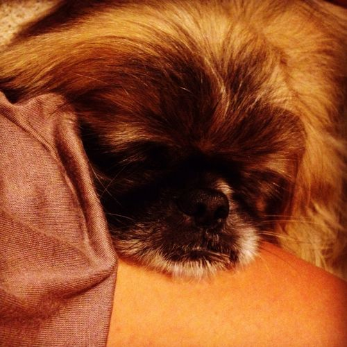 Leo Bau Dog Love Cane