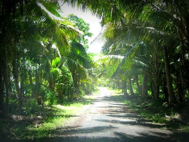 Coconut Trees CoconutGrove Coconutroad Samoa Samoan Life Relaxing Nature Home Sweet Home P Peace And Quiet