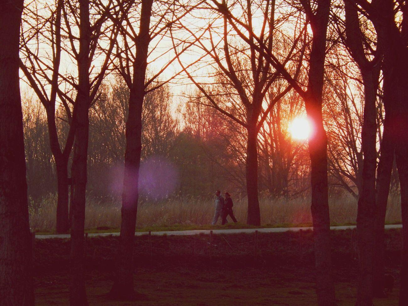Walking in sunset Delftse Hout EyeEmBestPics EyeEm Best Shots