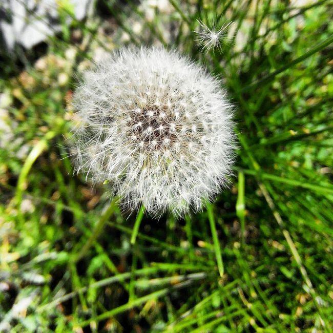 Nofilter Beauty Naturelovers Flower Make A Wish !