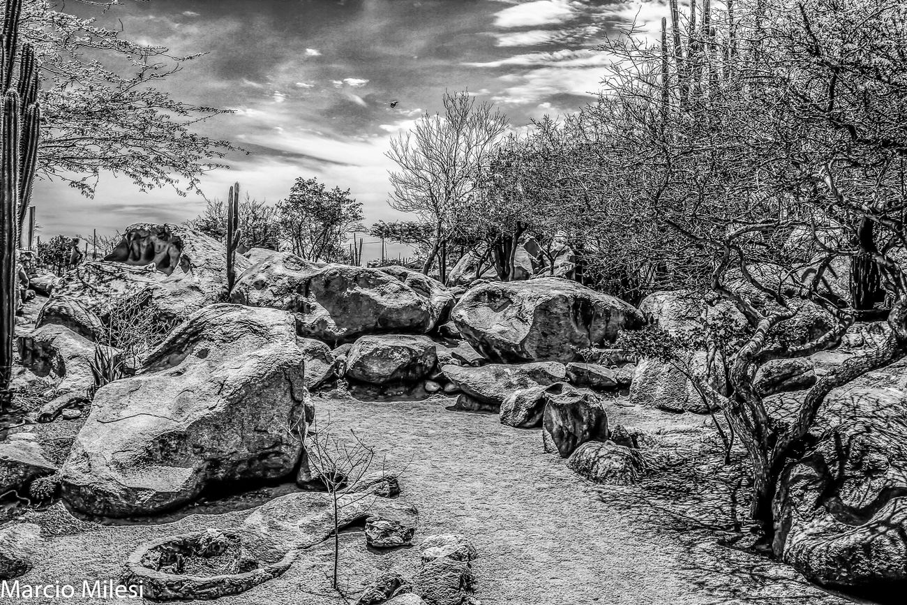 Casibari Rock!! #cactus Flowers #rocks Blackandwhite Close-up Day Nature No People Sky Tree